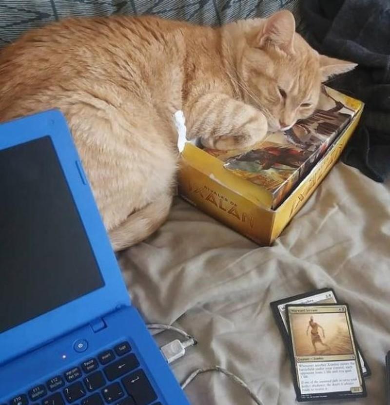 Gato Magic